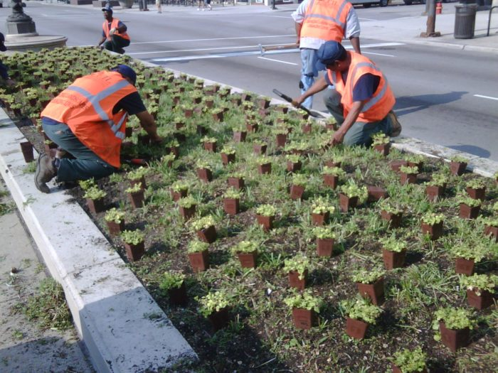 landscaping workers in orange county CA planting hundreds of flowers on Calle Frontera rd.